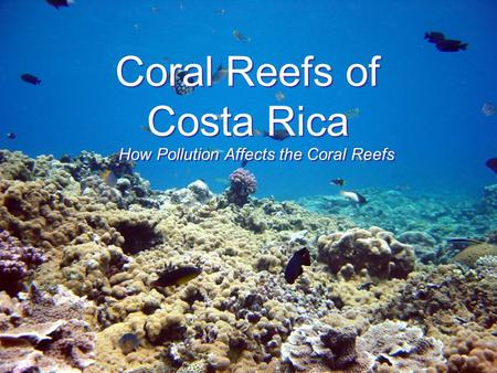 Coral Reefs of Costa Rica How Pollution Affects the Coral Reefs.
