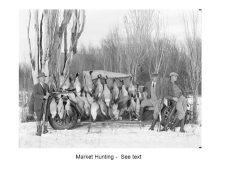 Market Hunting -  See text