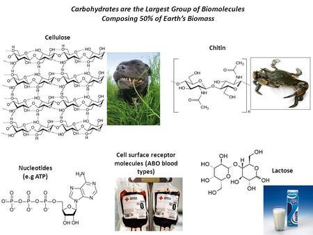 Carbohydrates are the Largest Group of Biomolecules