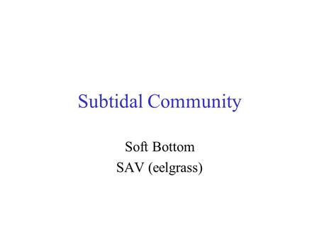 Soft Bottom SAV (eelgrass)