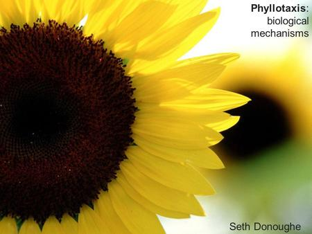 Phyllotaxis: biological mechanisms Seth Donoughe.