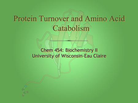 Chem 454: Biochemistry II University of Wisconsin-Eau Claire Chem 454: Biochemistry II University of Wisconsin-Eau Claire Protein Turnover and Amino Acid.