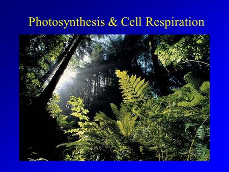 Photosynthesis & Cell Respiration Add Far Side Cartoon.