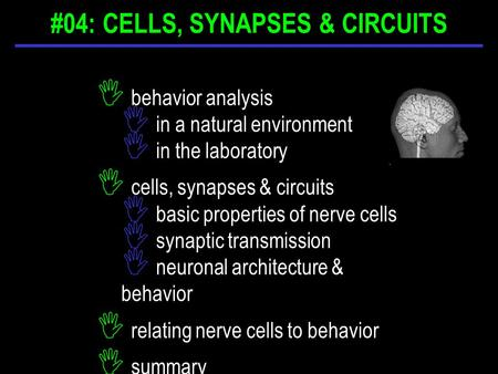 I behavior analysis I in a natural environment I in the laboratory I cells, synapses & circuits I basic properties of nerve cells I synaptic transmission.