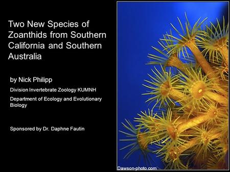 Two New Species of Zoanthids from Southern California and Southern Australia by Nick Philipp Division Invertebrate Zoology KUMNH Department of Ecology.
