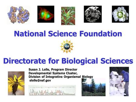 National Science Foundation Directorate for Biological Sciences Susan J. Lolle, Program Director Developmental Systems Cluster, Division of Integrative.