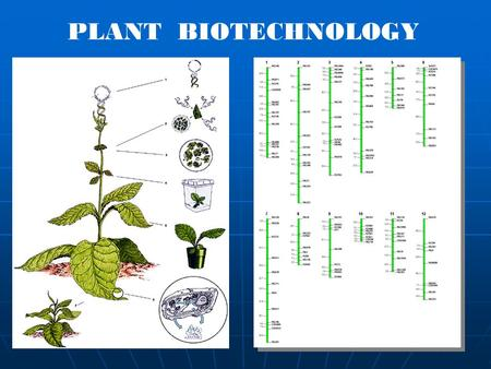 PLANT BIOTECHNOLOGY. Biotechnology ? The application of biological organisms, systems or processes to manufacturing and service industries The application.