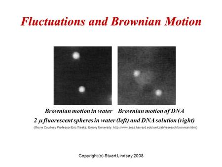 Fluctuations and Brownian Motion 2  fluorescent spheres in water (left) and DNA solution (right) (Movie Courtesy Professor Eric Weeks, Emory University: