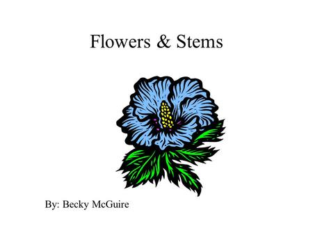 Flowers & Stems By: Becky McGuire. Flowers Contains four parts 1. sepals: protects opening bud and flower; supports petals 2. petals: colorful to attract.