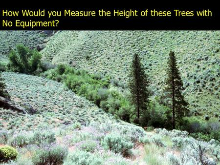 How Would you Measure the Height of these Trees with No Equipment?