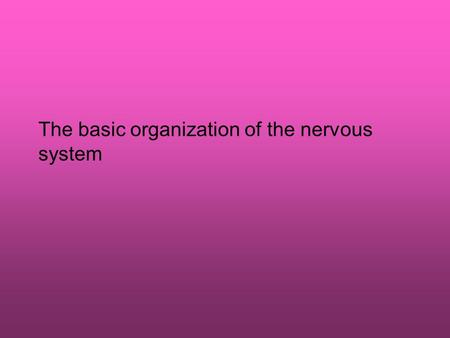 The basic organization of the nervous system. The divisions of the nervous system The nervous system is composed of central nervous system the brain spinal.
