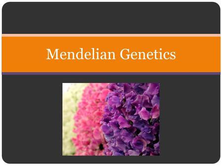 Mendelian Genetics. Gregor Mendel (July 20, 1822 – January 6, 1884) Augustinian priest and scientist, and is often called the father of genetics for his.