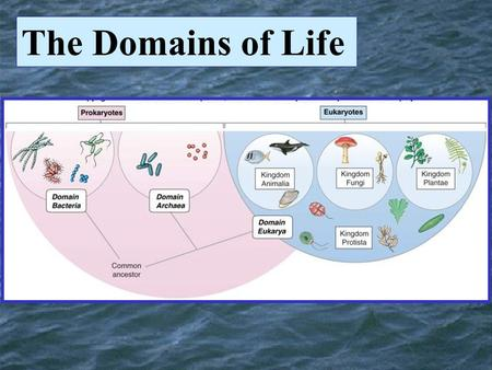 The Domains of Life. Microbes Bacteria Archaea Domains Bacteria and Archaea Very Small, Very simple cells.