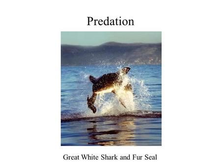 Predation Great White Shark and Fur Seal. Other Plant Defenses Include: mechanical defenses - plant thorns and spines deter many vertebrate herbivores,