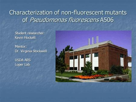Characterization of non-fluorescent mutants of Pseudomonas fluorescens A506 Student researcher: Kevin Hockett Mentor: Dr. Virginia Stockwell USDA ARS Loper.