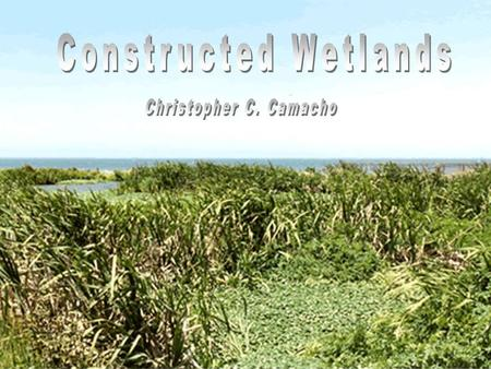 Characteristics of Wetlands  Must have Hydrophytes Hydrophytes Soils that are saturated, flooded or ponded long enough to develop anaerobic conditions.Soils.