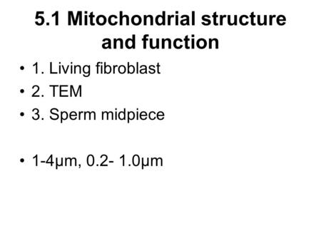 5.1 Mitochondrial structure and function 1. Living fibroblast 2. TEM 3. Sperm midpiece 1-4μm, 0.2- 1.0μm.