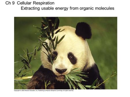 Ch 9 Cellular Respiration Extracting usable energy from organic molecules.