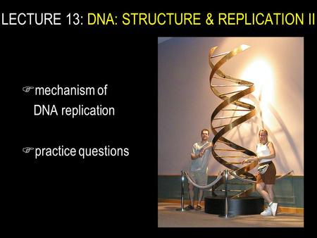 F mechanism of DNA replication F practice questions LECTURE 13: DNA: STRUCTURE & REPLICATION II.