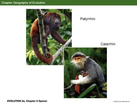 Chapter Geography of Evolution Platyrrhini Catarrhini.