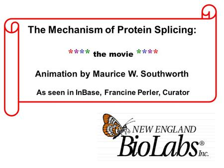 The Mechanism of Protein Splicing: **** the movie **** Animation by Maurice W. Southworth As seen in InBase, Francine Perler, Curator.