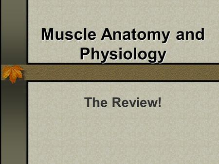 Muscle Anatomy and Physiology The Review!. Skeletal Muscle Functions Locomotion Movement Maintaining Posture Generating Heat!