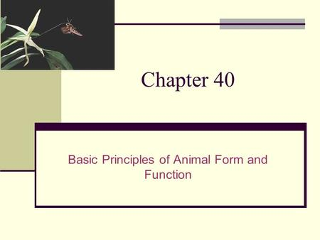 Chapter 40 Basic Principles of Animal Form and Function.