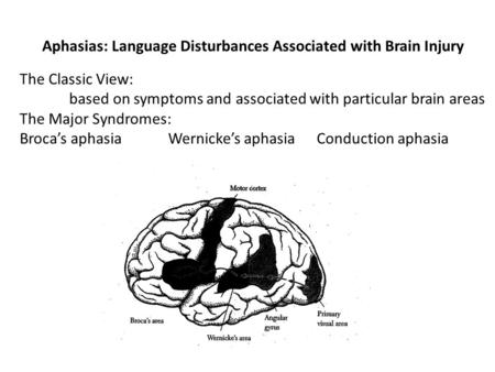 Aphasias: Language Disturbances Associated with Brain Injury The Classic View: based on symptoms and associated with particular brain areas The Major Syndromes: