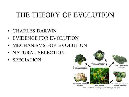 What evidence supports the theory of evolution by natural selection?