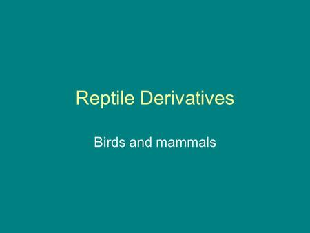 "Reptile Derivatives Birds and mammals. Archaeopteryx = ""first"" bird."