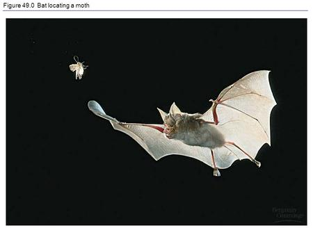 Figure 49.0 Bat locating a moth. Figure 49.2 Sensory transduction by a taste receptor.