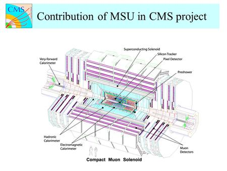 Contribution of MSU in CMS project. Preparations for CMS Heavy Ion Physics Program Development of software and reconstruction algorithms for pp and heavy.