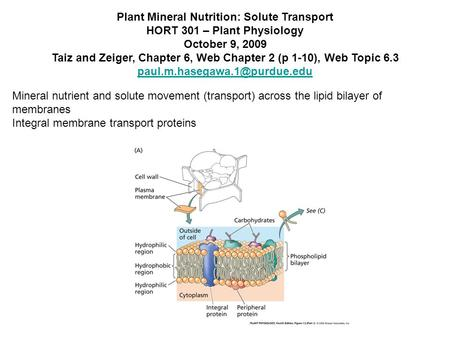 Plant Mineral Nutrition: Solute Transport HORT 301 – Plant Physiology October 9, 2009 Taiz and Zeiger, Chapter 6, Web Chapter 2 (p 1-10), Web Topic 6.3.