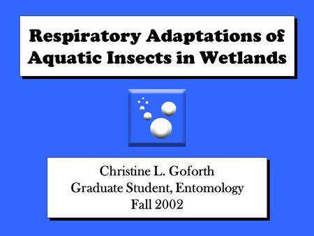 Respiratory Adaptations of Aquatic Insects in Wetlands Christine L. Goforth Graduate Student, Entomology Fall 2002 Christine L. Goforth Graduate Student,