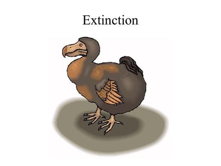 Extinction. The dodo What makes species vulnerable to extinction?