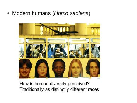 Modern humans (Homo sapiens) How is human diversity perceived? Traditionally as distinctly different races.