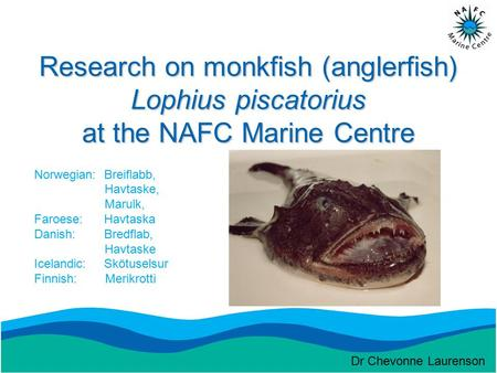 Research on monkfish (anglerfish) Lophius piscatorius at the NAFC Marine Centre Norwegian: Breiflabb, Havtaske, Marulk, Faroese: Havtaska Danish: Bredflab,