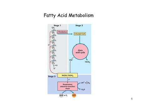 1 Fatty Acid Metabolism. 2 Free Energy of Oxidation of Carbon Compounds.
