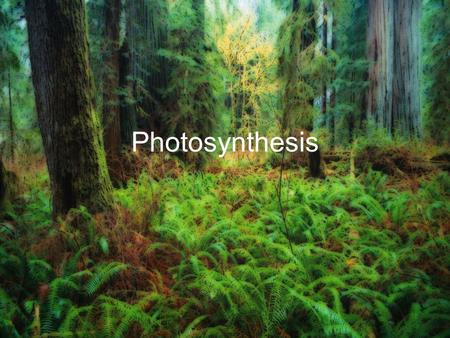 Photosynthesis. What is photosynthesis? Photosynthesis may look like a large, intimidating word. Let's break it down in order to get a general idea of.