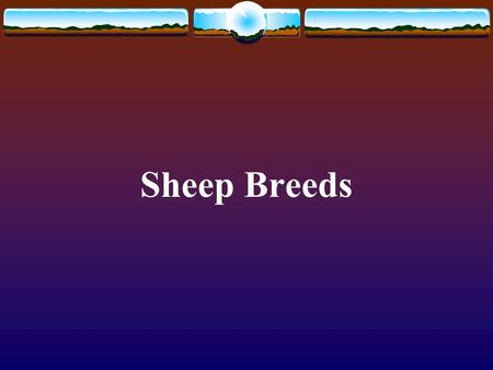Sheep Breeds. Merino Pictures from  Originated in Spain Now common in Australia Dual purpose breed--wool and.