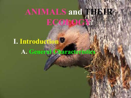 ANIMALS and THEIR ECOLOGY I. Introduction A. General Characteristics.