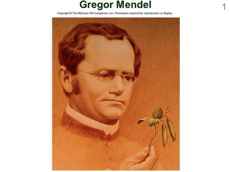 gregor mendel austrian monk Biography: in 1851 austrian monk gregor mendel was sent by his monastery to the university of vienna to study mathematics and science upon his return in 1854, be .