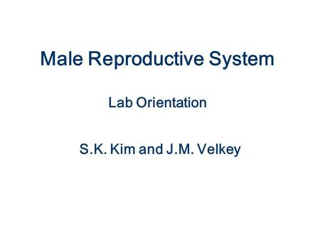 Male Reproductive System Lab Orientation
