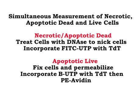 Simultaneous Measurement of Necrotic, Apoptotic Dead and Live Cells Necrotic/Apoptotic Dead Treat Cells with DNAse to nick cells Incorporate FITC-UTP with.