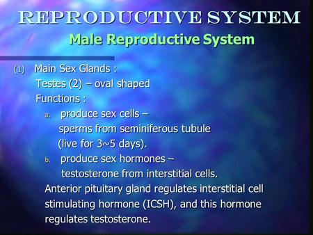 Reproductive System Male Reproductive System (1) Main Sex Glands : Testes (2) – oval shaped Testes (2) – oval shaped Functions : Functions : a. produce.