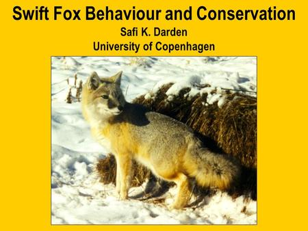Swift Fox Behaviour and Conservation Safi K. Darden University of Copenhagen.