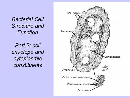 Bacterial Cell Structure and Function Part 2: cell envelope and cytoplasmic constituents.