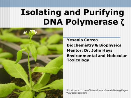 Isolating and Purifying DNA Polymerase ζ Yesenia Correa Biochemistry & Biophysics Mentor: Dr. John Hays Environmental and Molecular Toxicology