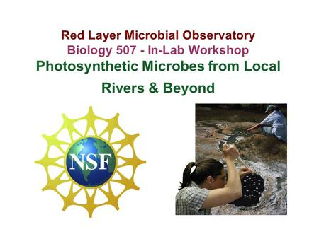 Red Layer Microbial Observatory Biology 507 - In-Lab Workshop Photosynthetic Microbes from Local Rivers & Beyond.