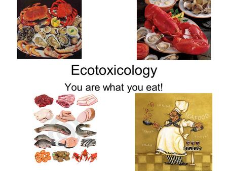 Ecotoxicology You are what you eat!. Where is Pollution? Most near the coast… 76% of fish harvested come from the coast.